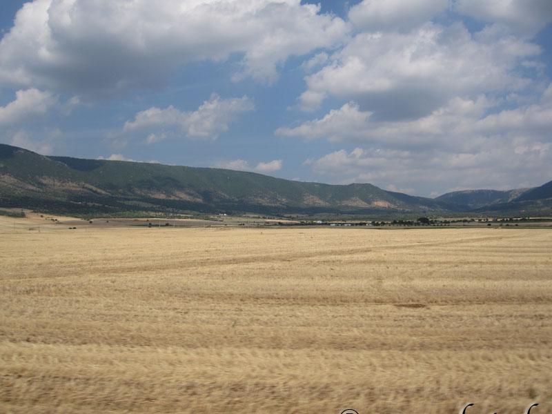 Campi di grano tra San Severo e Apricena