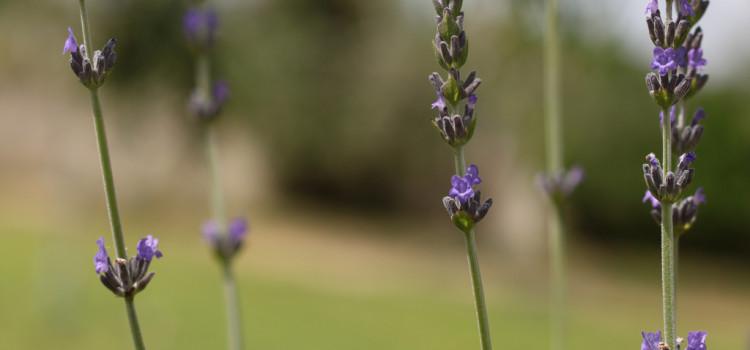 La natura in Puglia a Primavera