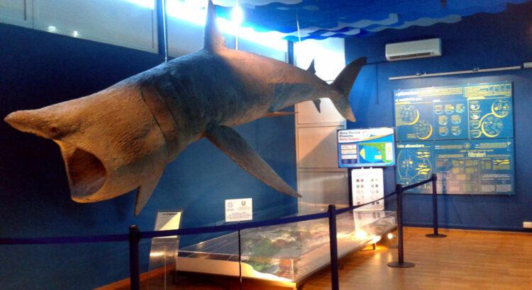 Porto Cesareo, il Museo di Biologia Marina