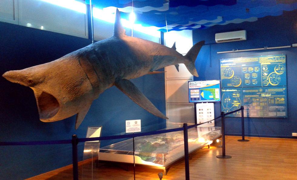 Porto Cesareo Il Museo Di Biologia Marina Laterradipuglia Shop