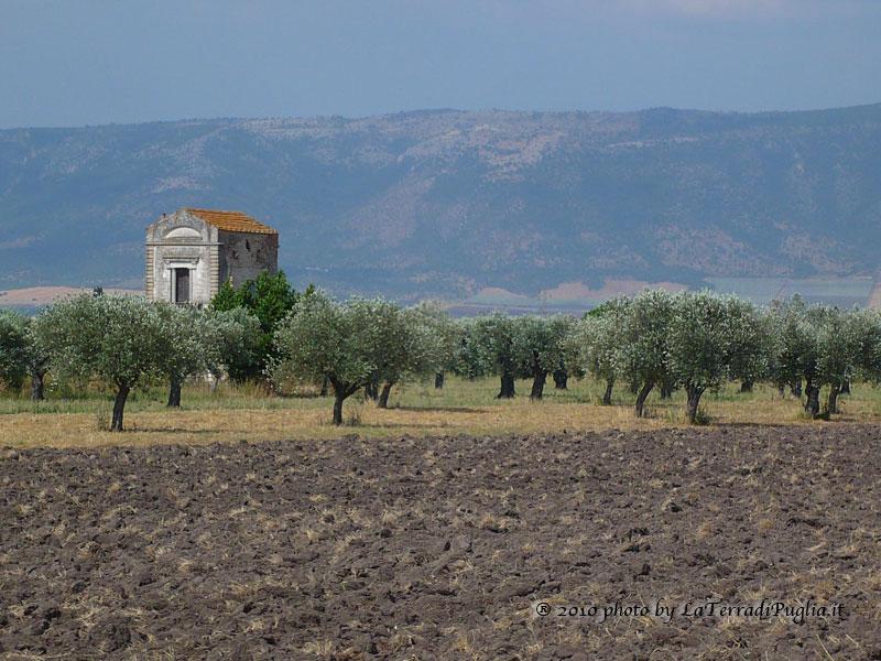 Masseria tra gli ulivi, sullo sfondo il Gargano