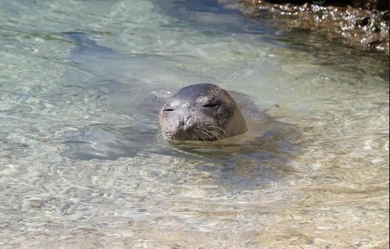 Avvistata foca monaca in Salento