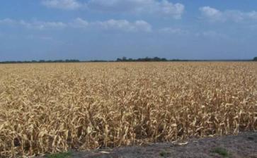 Puglia, è emergenza siccità