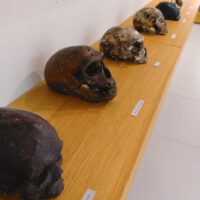 Teschi-Genere-Homo