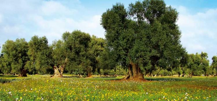 La Puglia, una vera regione bio