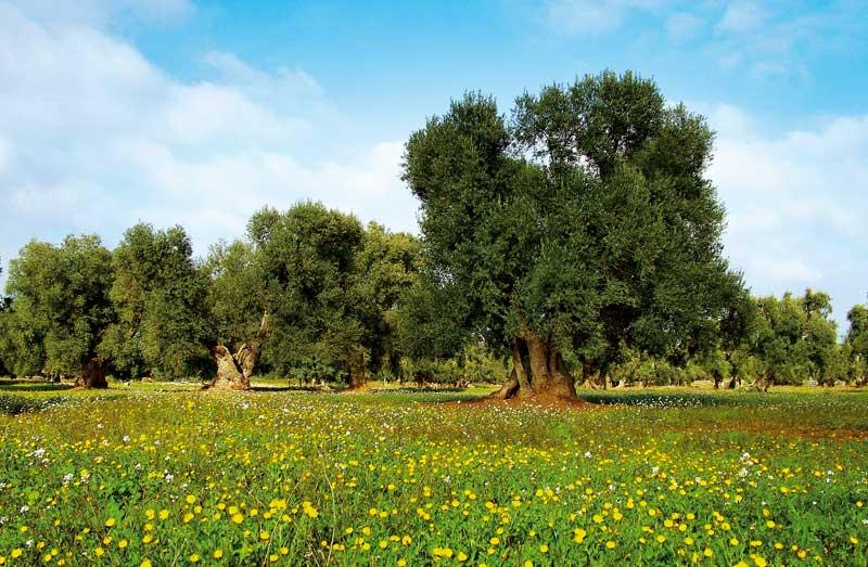 agricoltura-biologica-puglia