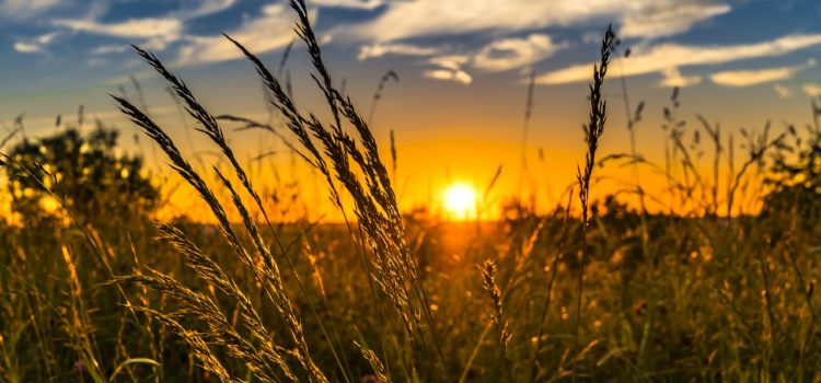 L'agricoltura biologica ed in particolare la BioDinamica è criticata, ma è l'unica salvezza per la sostenibilità