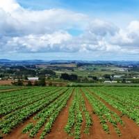 agricoltura-puglia-giovani-mezzogiorno