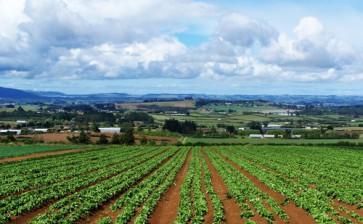 La Puglia punta su giovani agricoltori del Mezzogiorno