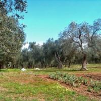 agricoltura-pugliese-fondi-europei