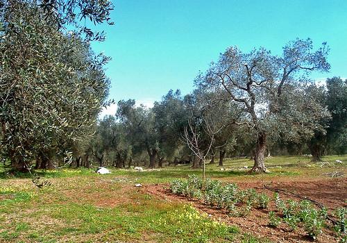 La Puglia dovrà rimborsare i fondi europei per l'agricoltura?