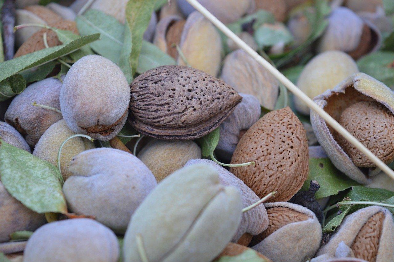 prodotti pugliesi tipici – Laterradipuglia.it