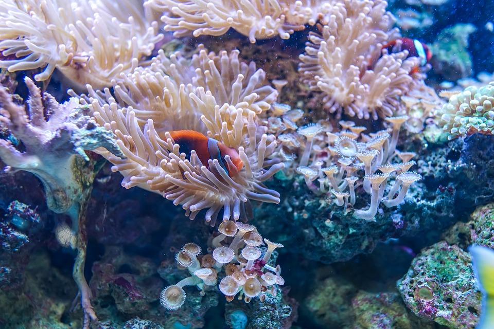 barriera corallina in Puglia - La Terra Di Puglia