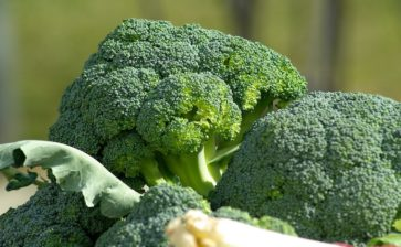 Il broccolo, un alleato per la dieta antitumorale