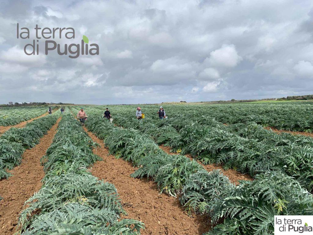 campo in Puglia