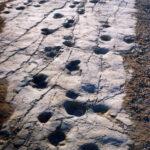 La cava dei dinosauri di Altamura