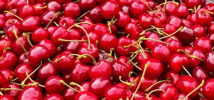 Parte la raccolta delle ciliegie Bigarreau in Puglia