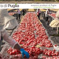 Dove acquistare i prodotti tipici del Gargano