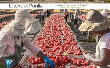 Dove acquistare all'ingrosso i prodotti alimentari della Puglia