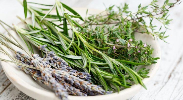 Raduno alla scoperta delle erbe selvatiche in cucina