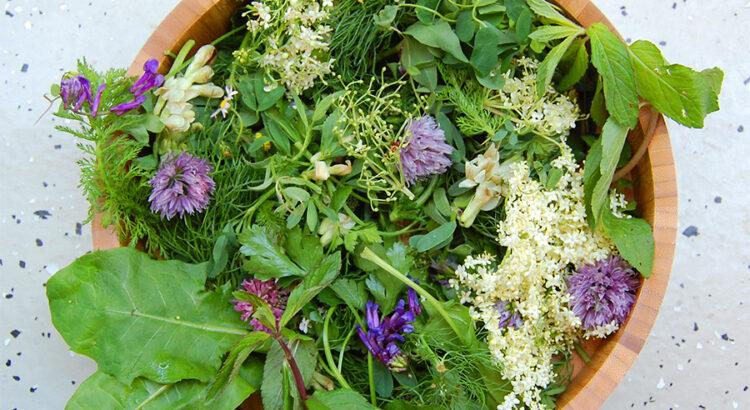 Le erbe officinali commestibili della Puglia