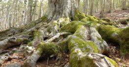Da vedere: le faggete vetuste della Foresta Umbra