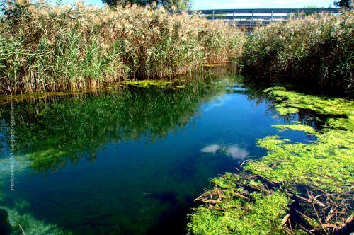 fiume-cervaro