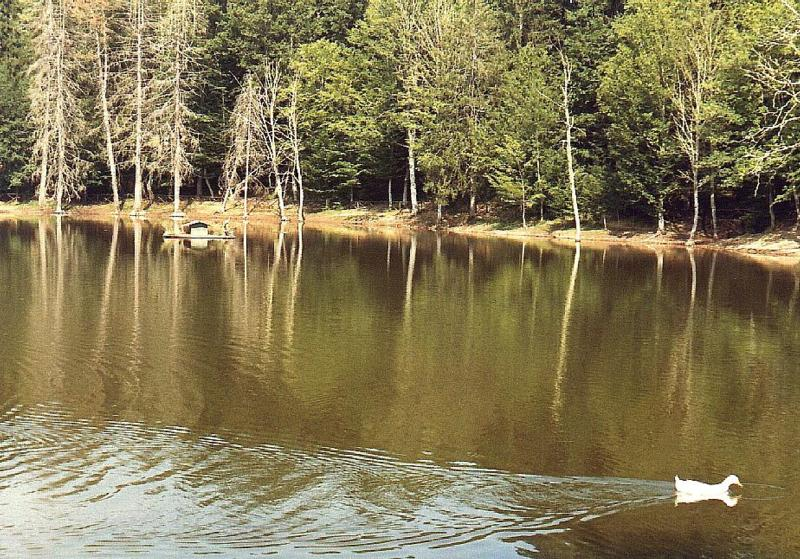 Riserva Naturale Foresta Umbra