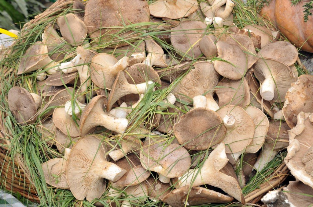 funghi-cardoncelli La Terra Di Puglia