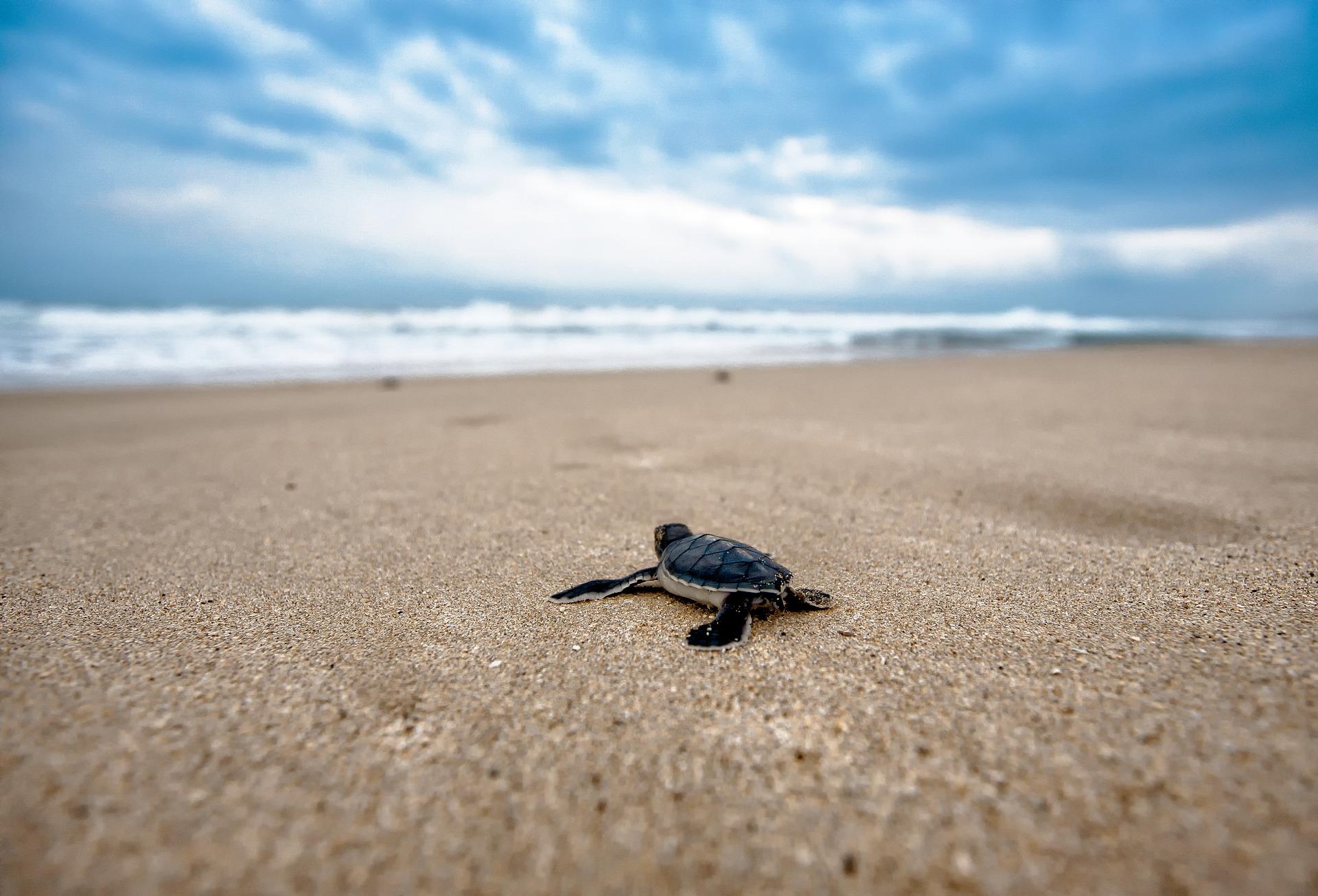 gallipoli-tartarughe-spiaggia