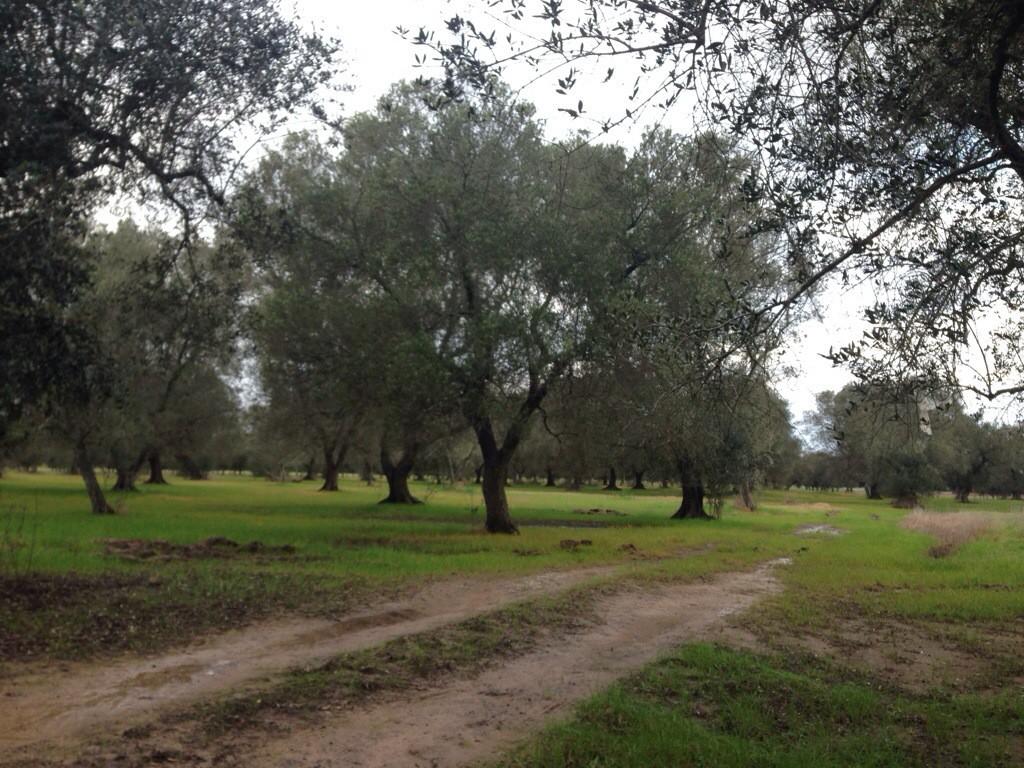 giardino-botanico-giuggianello-4