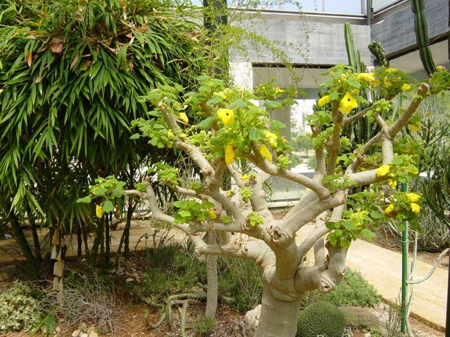 giardino-botanico-giuggianello-5