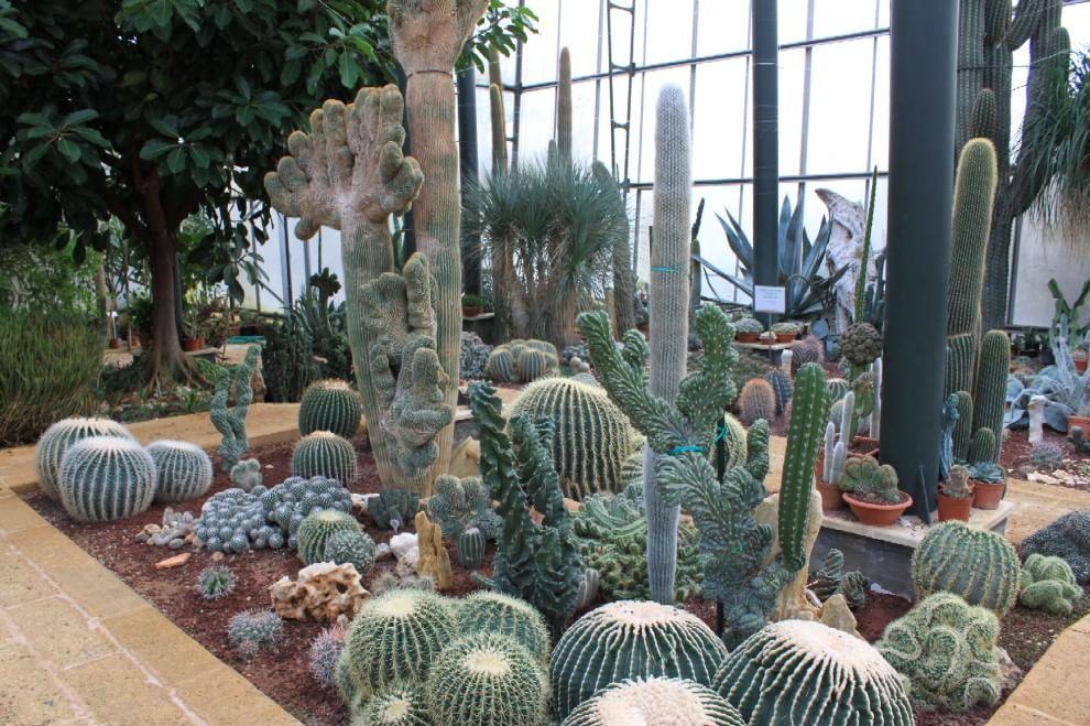 giardino-botanico-giuggianello-6