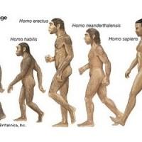 Homo sapiens erectus