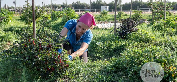 Il cibo sicuro, bio e km0 pugliese arriva sulle mense pubbliche