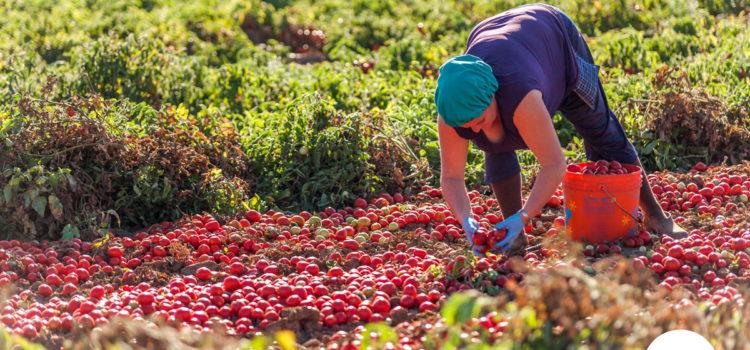 Marketing e distribuzione aumentano il prezzo della passata di pomodoro