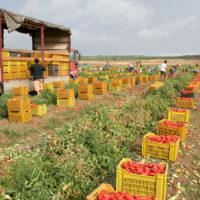 passata-pomodoro-biologico