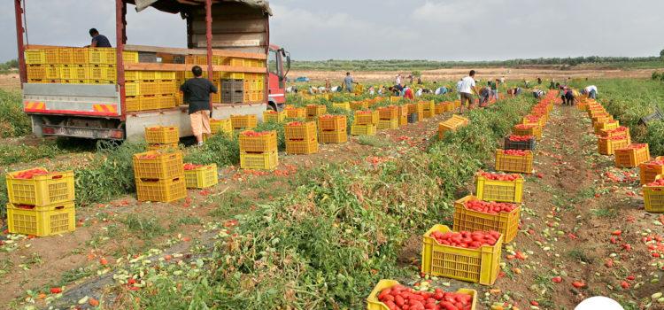 Come fa una passata di pomodoro a costare solo 39 centesimi ?