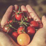 La passata di pomodoro biologica
