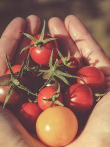 Il pomodoro: poche calorie e tante sostanze nutritive