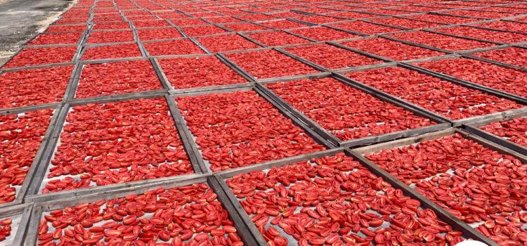 Pomodori secchi, proprietà e benefici