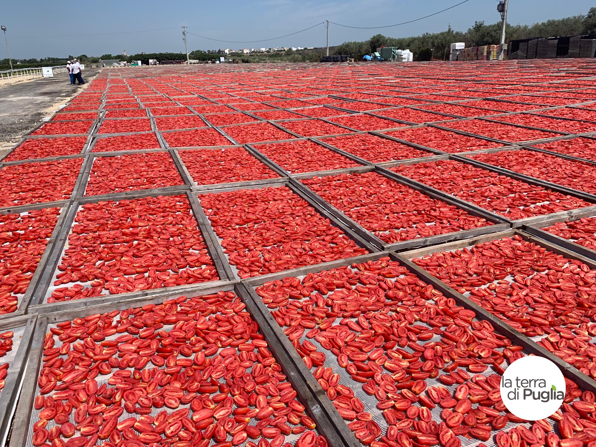 pomodori-secchi-1