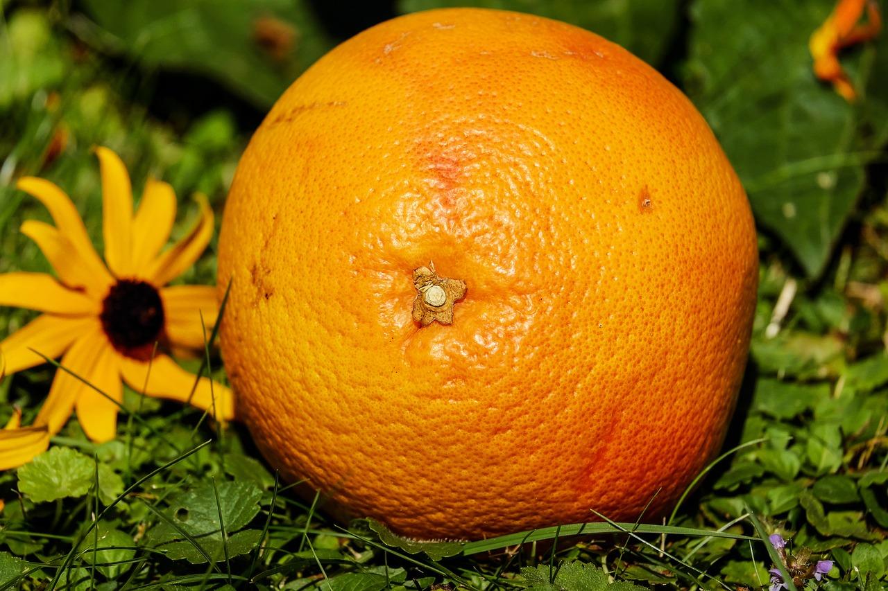 pompelmo-frutto