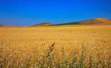 Allarme siccità in Puglia