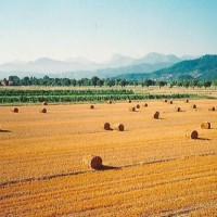 puglia campi grano