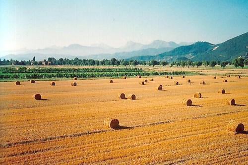 In arrivo la pasta made in Puglia al 100 percento