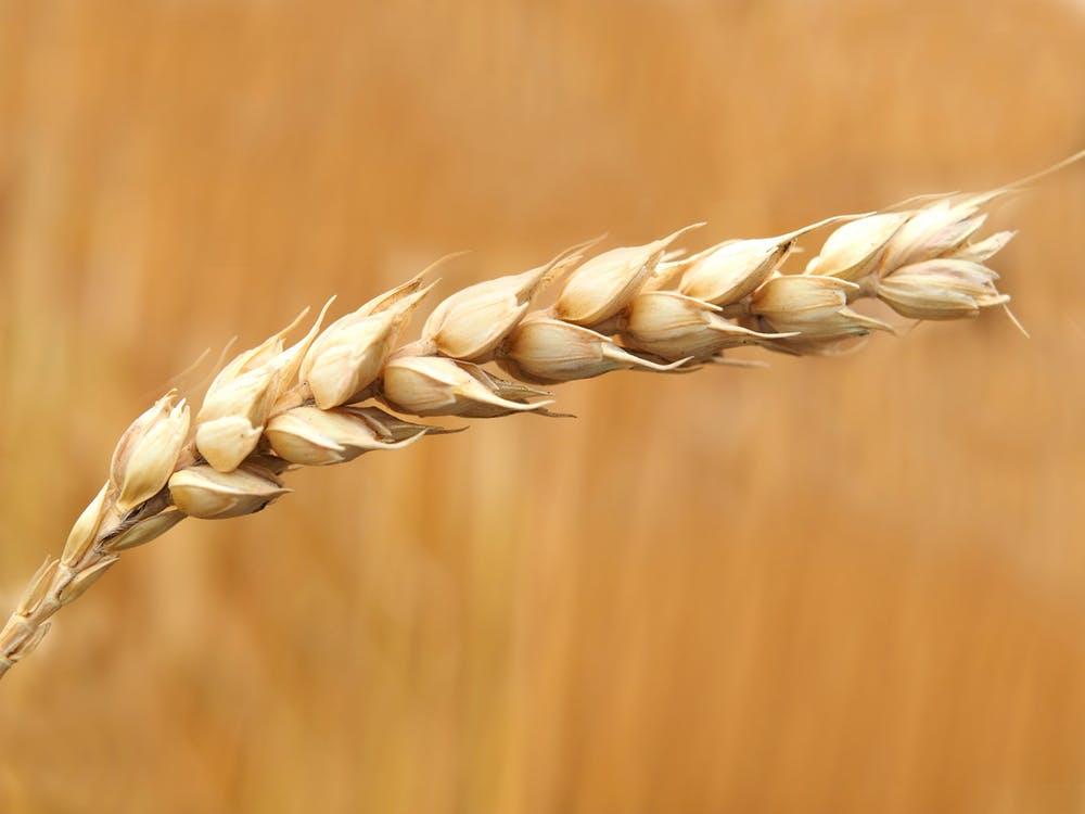 quali tipi di farina esistono – La Terra di Puglia