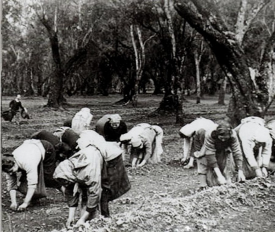 raccoglitrici di olive - La Terra di Puglia.it