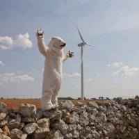 salento-orso-polare-ambiente