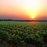 salento-terra-vinicola